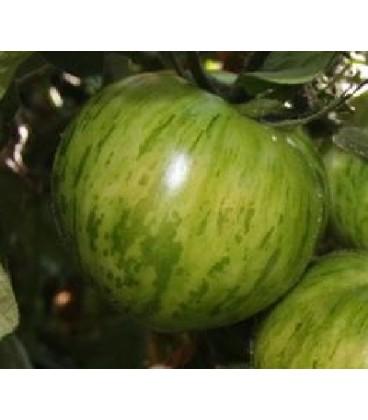 tomate black zebra - semillas ecológicas