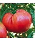 tomate homestead (semillas ecológicas biodinamicas)