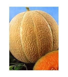 melón hale's best (semillas ecológicas)