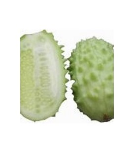 pepino West Indian Gherkin (semillas ecológicas)