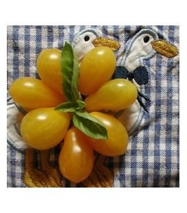 tomate polen (semillas ecológicas)
