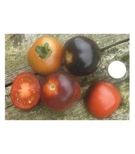 tomate Indigo Rose (semillas ecológicas)