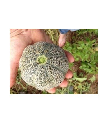 melon minnesota midget (semillas ecológicas)