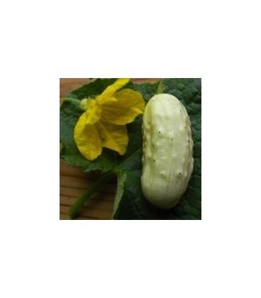 pepino blanco miniatura (semillas ecológicas)