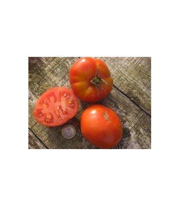 tomate Aurora (semillas ecológicas)