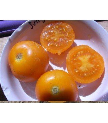 tomate sungella (semillas ecológicas)
