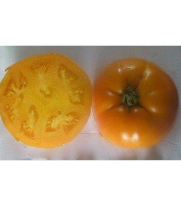 tomate persimmon (semillas ecológicas)