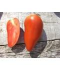 tomate federle (semillas ecológicas)