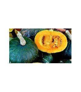 calabaza green hokkaido (semillas ecológicas y biodinamicas)