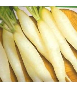 rabanito candela de hielo (semillas ecológicas)