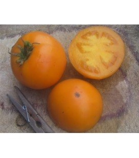 tomate earl of edgecombe (semillas ecológicas)