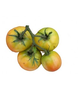 tomate longkeeper (semillas ecológicas)