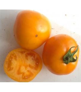 tomate caro Rich (semillas ecológicas)