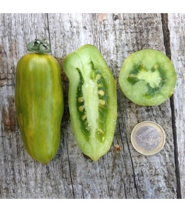 tomate green sausage (semillas ecológicas)