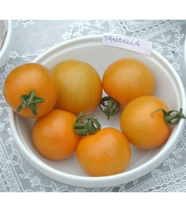 tomate tangella (semillas ecológicas)
