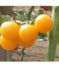 tomate tangidel (semillas ecológicas)