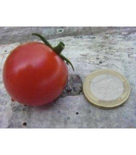 tomate tumbler (semillas ecológicas)