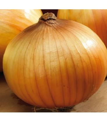 cebolla density (semillas ecologicas)
