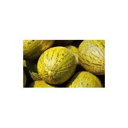plantel de melón piel de sapo