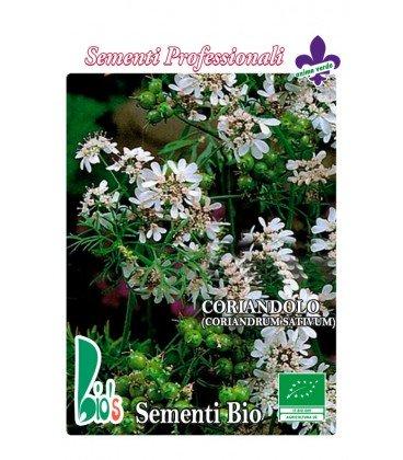 cilantro (semillas ecológicas)