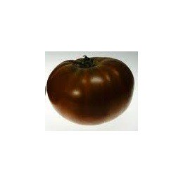 tomate Paul Robeson (semillas sin tratamiento)