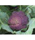 brocoli morado Rosalind (semillas sin tratamiento)