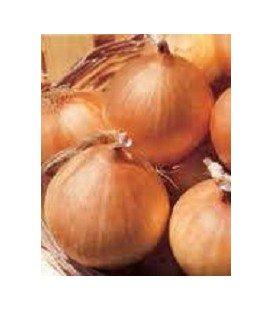 cebolla sturon - semillas ecológicas