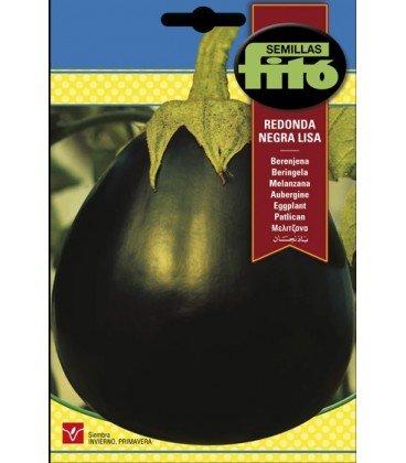 semillas de berenjena belleza negra