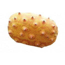 kiwano - Cucumis metuliferus- semillas ecológicas