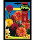 crisantemo de los jardines variado