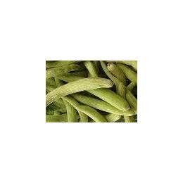 plantel de pepino armenio