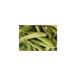 plantel de pepino alficoz