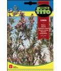 semillas de romero