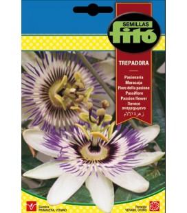 pasionaria - flor de la pasión (Passiflora caerulea)