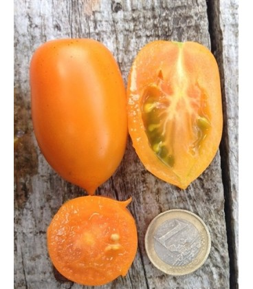 tomate amish gold- semillas ecológicas