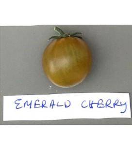 tomate cherry esmeralda (semillas ecológicas)