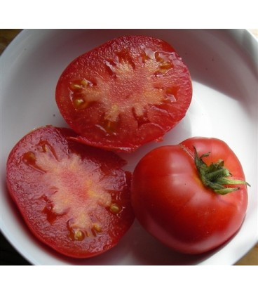 tomate forest fire