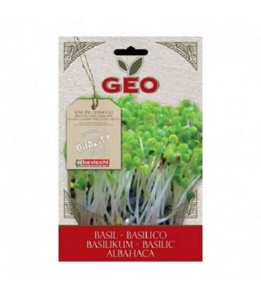albahaca para germinar geo