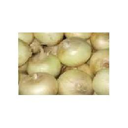 Plantel de cebolla dulce de Fuentes