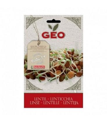 lentejas para germinar geo