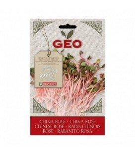 rabanito chino rosa para germinar geo