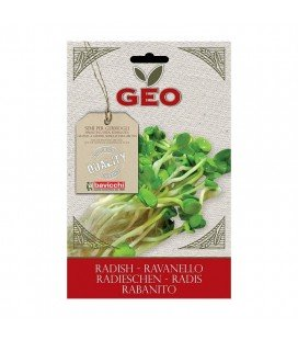 rabanito para germinar geo