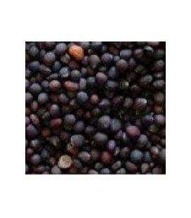Brocoli calabres para germinados (semillas ecológicas)