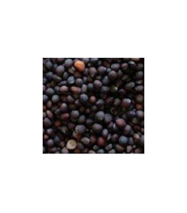 alfalfa para germinados (semillas ecológicas)