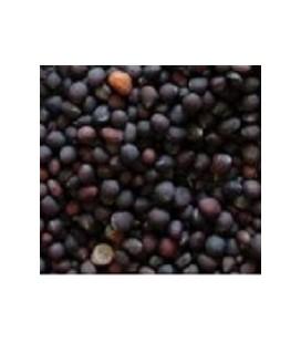 brocoli raab para germinados (semillas ecológicas)