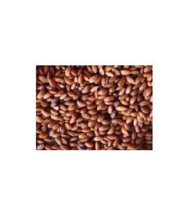 berros para germinados (semillas ecológicas)