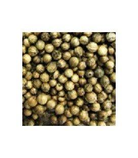 cilantro para germinados (semillas ecológicas)