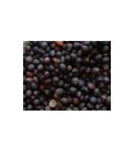 col kale para germinados (semillas ecológicas)