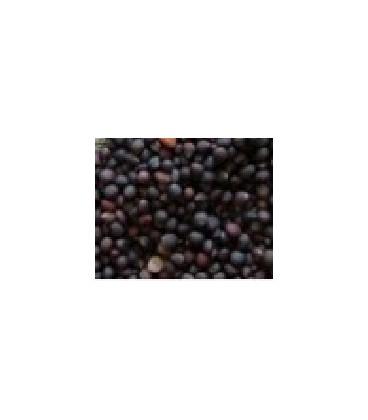 col lombarda para germinados (semillas ecológicas)