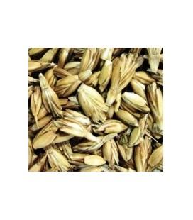 espelta para germinados (semillas ecológicas)